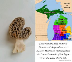 Morel valued at $10,000 because of Resemblance to Michigan
